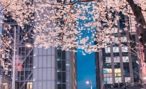 东京站八重洲口