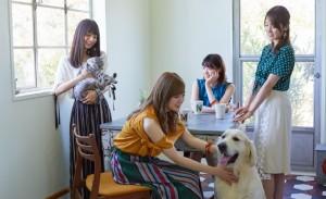 乃木坂与猫犬